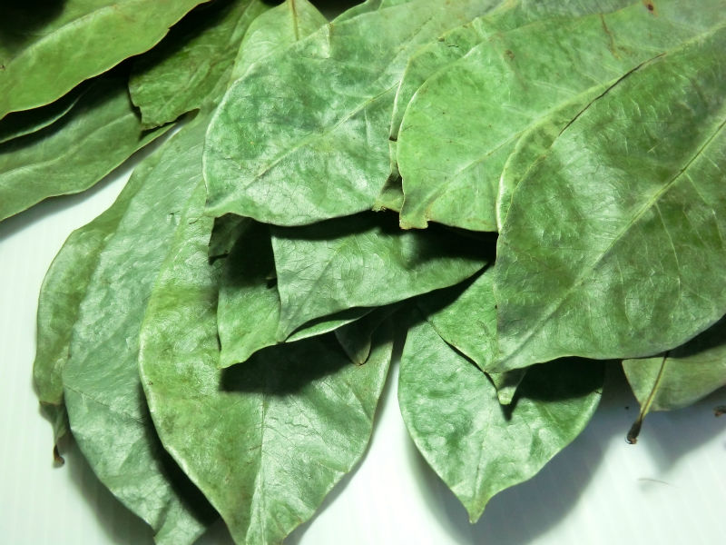 Advantages and Benefits of Soursop Leaves ...   Soursop Leaves